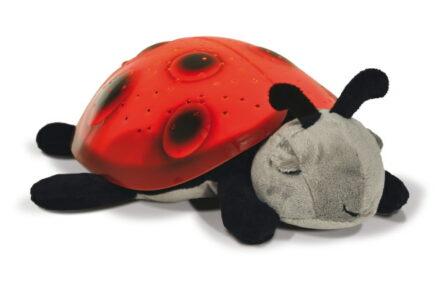 Der Herbst kommt…und ein Marienkäfer zieht bei uns ein!