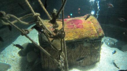 Nemo und seinen Freunden auf der Spur