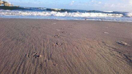 Manchmal braucht man einfach eine Auszeit: Insel Usedom und die Ostsee