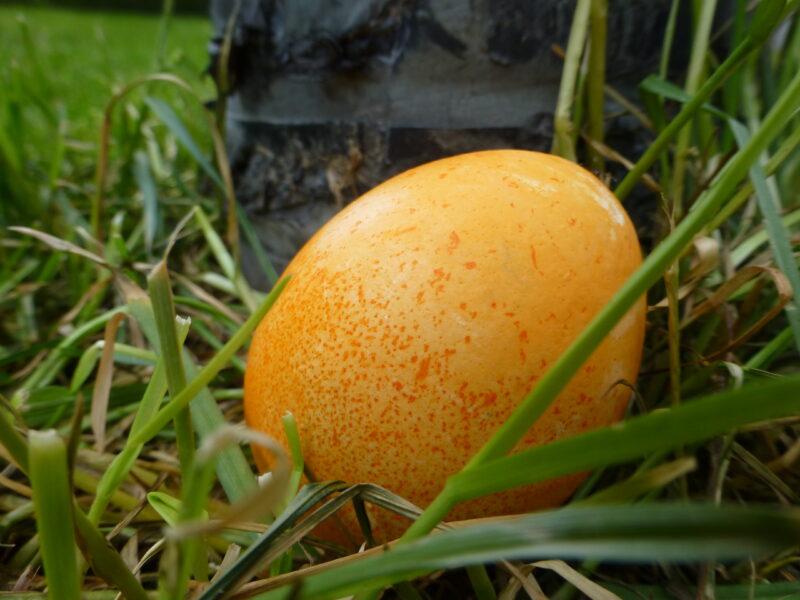 Ostergewinnspiel mit Holzfarm