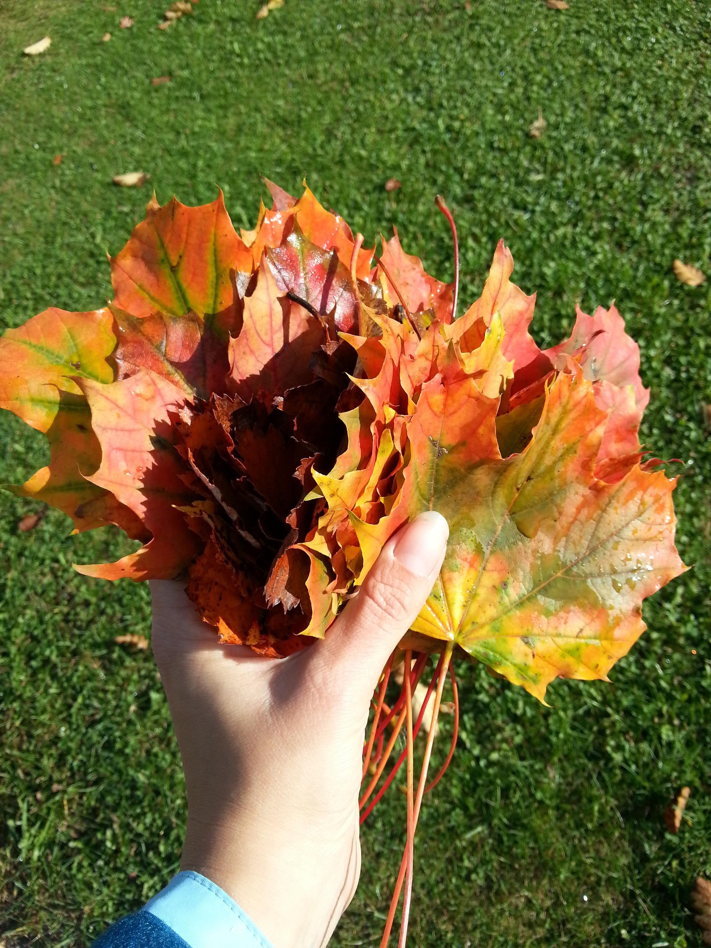 Blätter, Blätter, überall! Wir basteln mit Blättern! - Kinderchaos ...