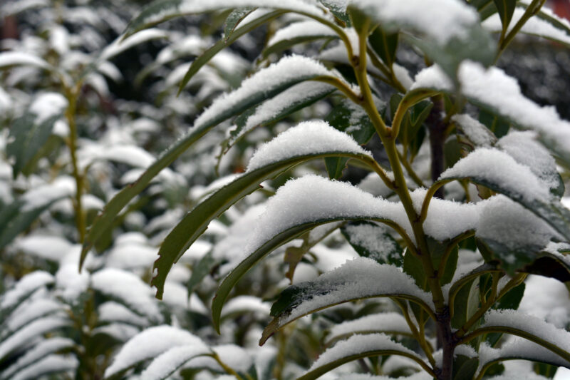 Fingerspiel: 5 Schneeflocken