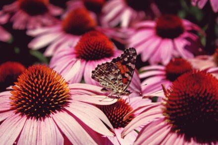 Fingerspiel für den Frühling + Sommer: Von der Raupe zum Schmetterling