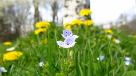 Ein August-Blumenstrauß für DICH….