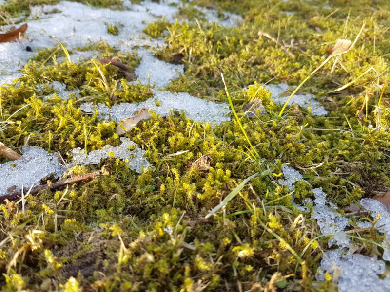 Es duftet nach Frühling! – Gewinnspiel mit Smafolk