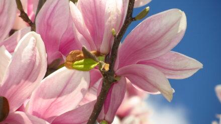 Ein Januar-Blumenstrauß für DICH…. und ein Februar-Blumenstrauß für DICH….