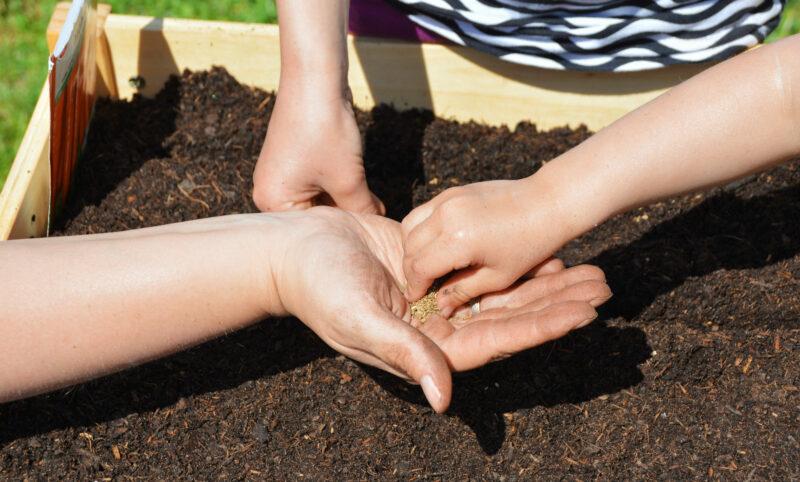 Fingerspiel für den Frühling: Hab´ein Beet im Garten klein