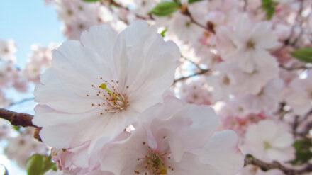 Ein März-April-Mai Blumenstrauß für DICH und DICH und DICH….