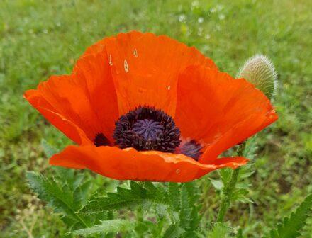 Ein Juni-Blumenstrauß für DICH….