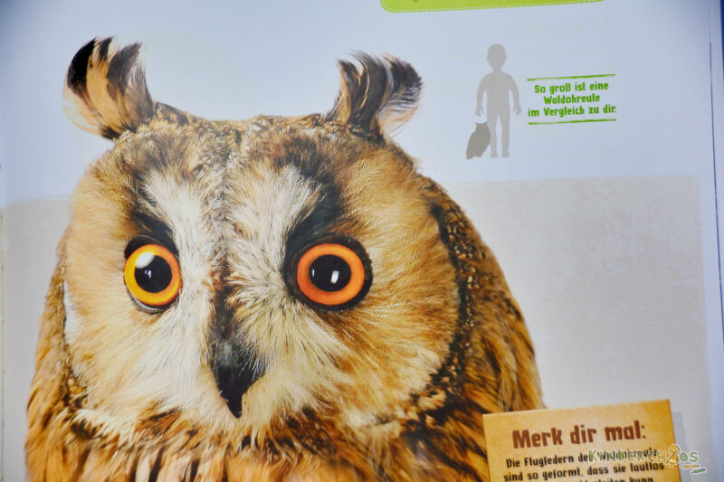 Kosmos Natur von Anfang an Tiere Kinderbuch Sachbuch