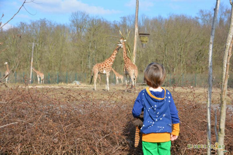Fuchs & Kiwi Giraffen Tierpark