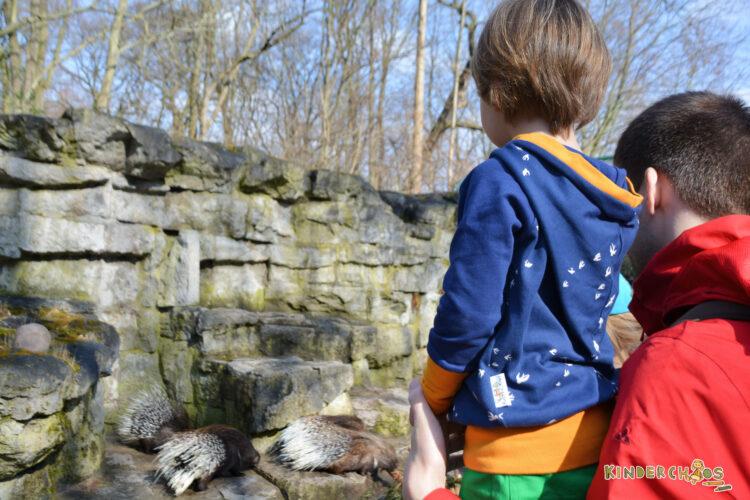 Fuchs & Kiwi Berlin Kinderkleidung Kindermode Hoodie Kinder Mama Schwalben Tierpark Berlin