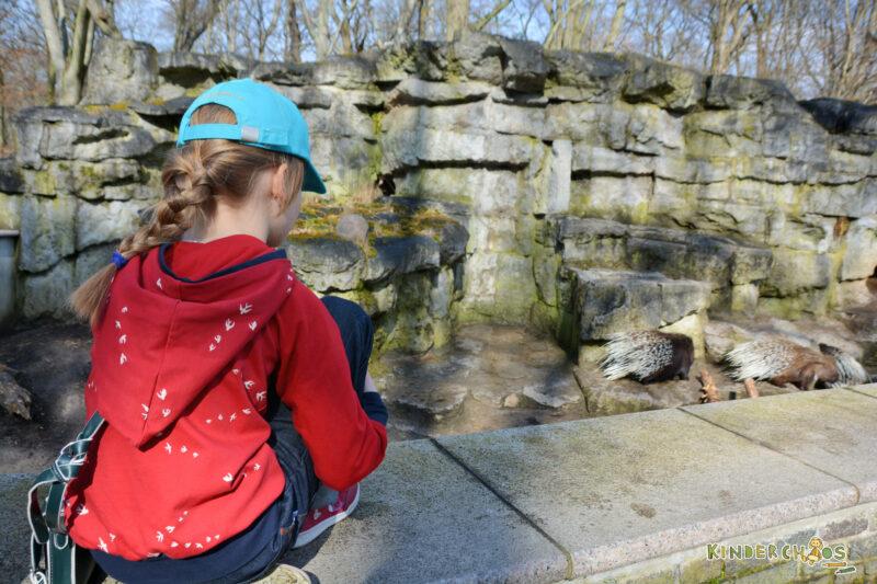 Fuchs und Kiwi Stachelschwein