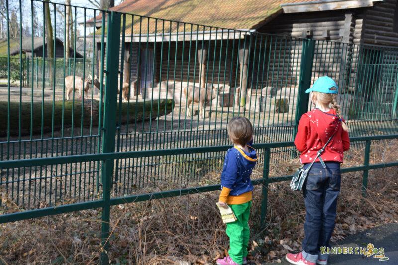 Fuchs und Kiwi Tierpark Berlin