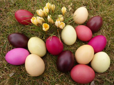 Gastbeitrag: Ostereier natürlich färben – nach alter Tradition