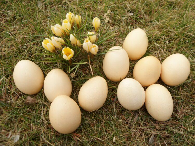 Ostereier natürlich färben - nach alter Tradition