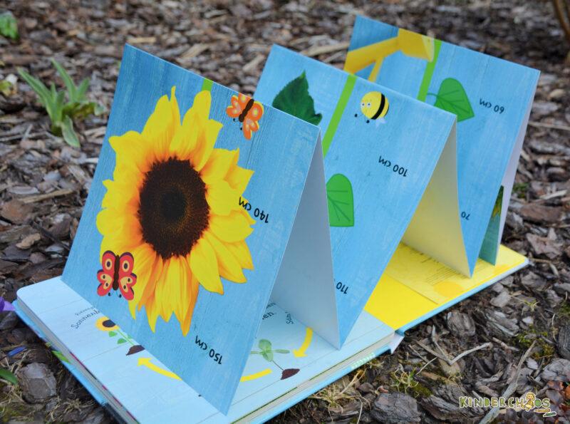 Wie wächst denn eine Sonnenblume? Kinderbuch
