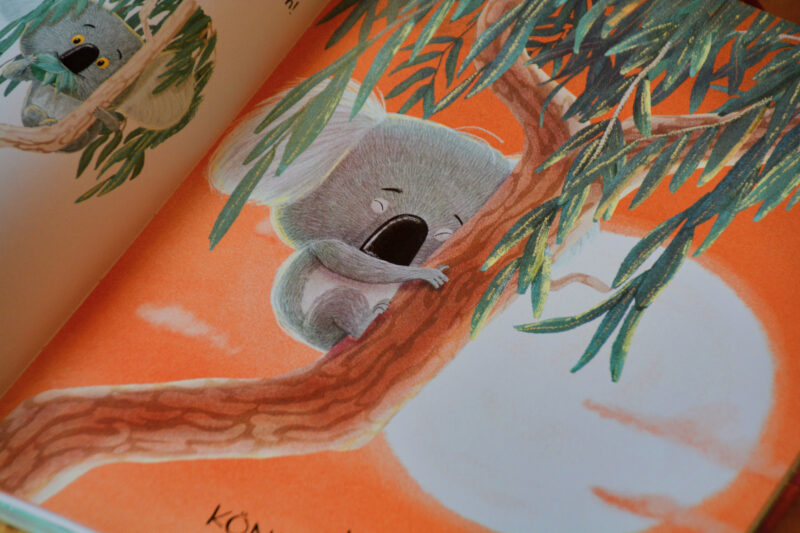 Trau dich Koala Bär Bilderbuch