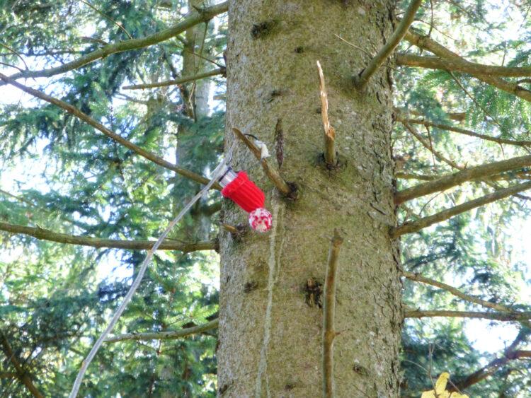 Geocache oben im Baum