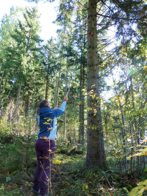 Geocache im Baum
