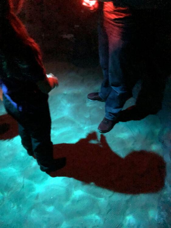 Biosphäre Potsdam Taschenlampen-Abenteuer