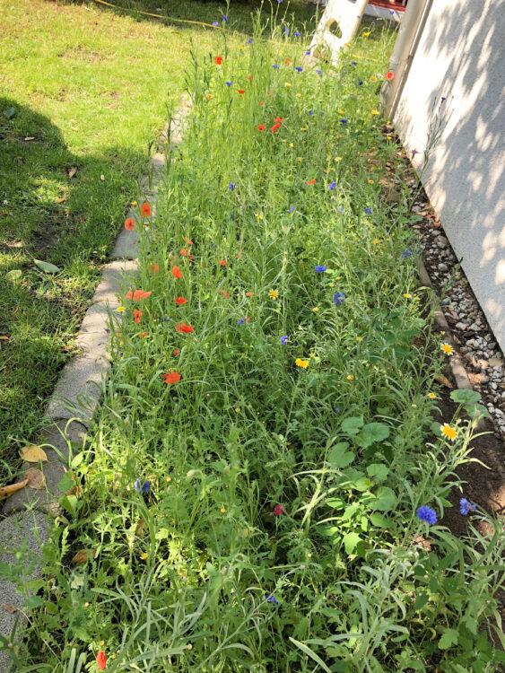 Bienenwiese in unserem Garten