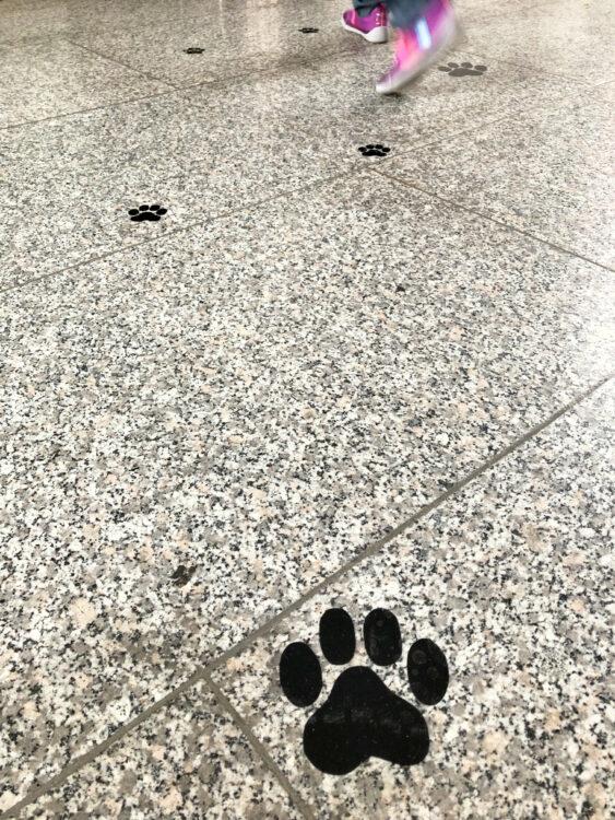 Fuchsspuren