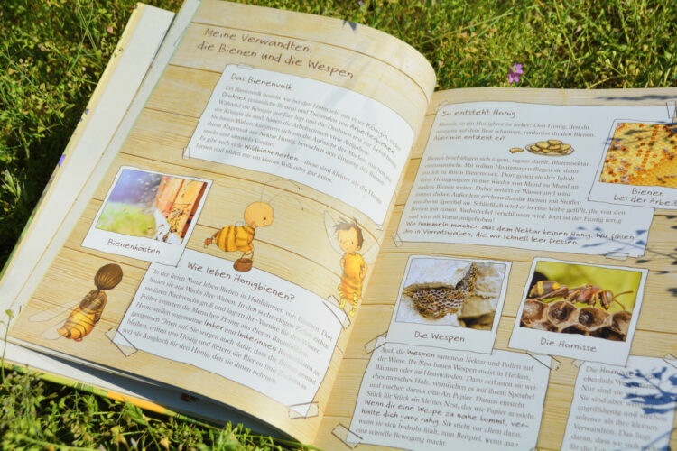 Biene, Wespe, Hummel oder Hornisse