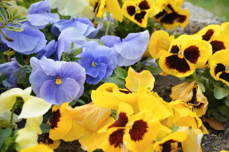 Blumenpracht im Frühling