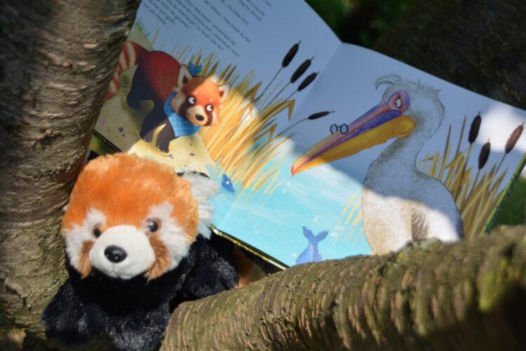 Bilderbuch Panda oder Katzenbär