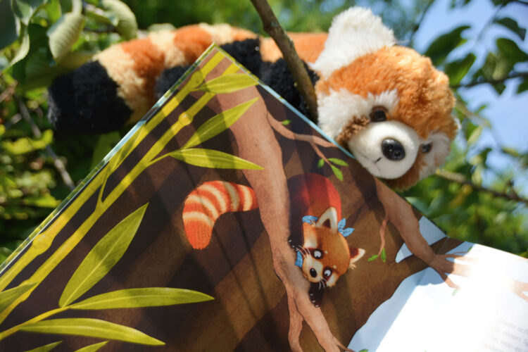 Kinderbuch Kleiner Panda Pai
