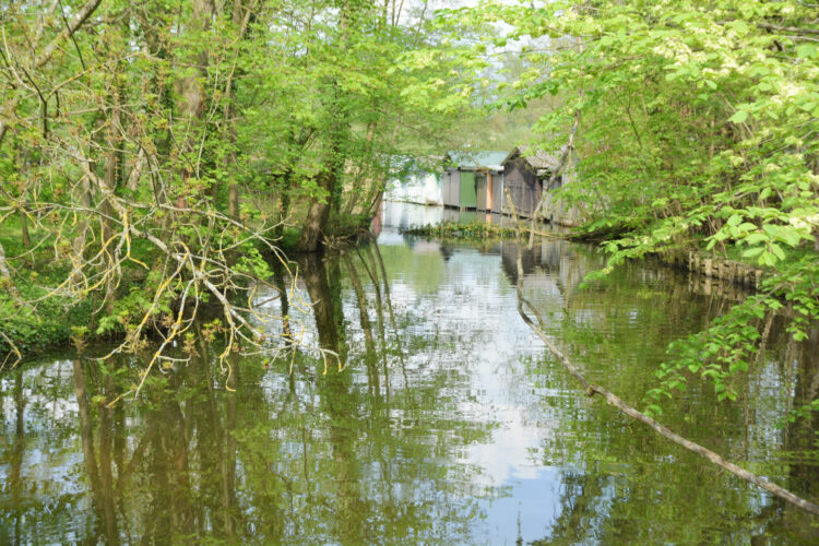 Natur in Mirow