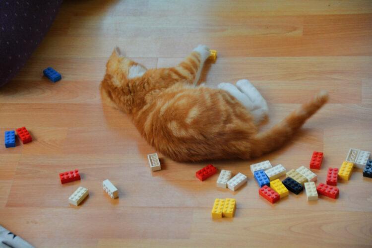 Katze spielt mit Lego
