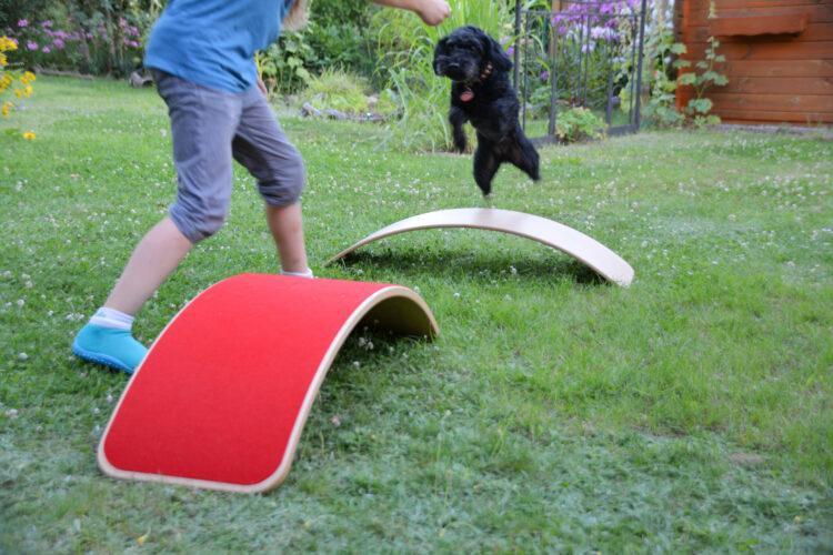 Balance-Boards werden zum Hunde-Parcours
