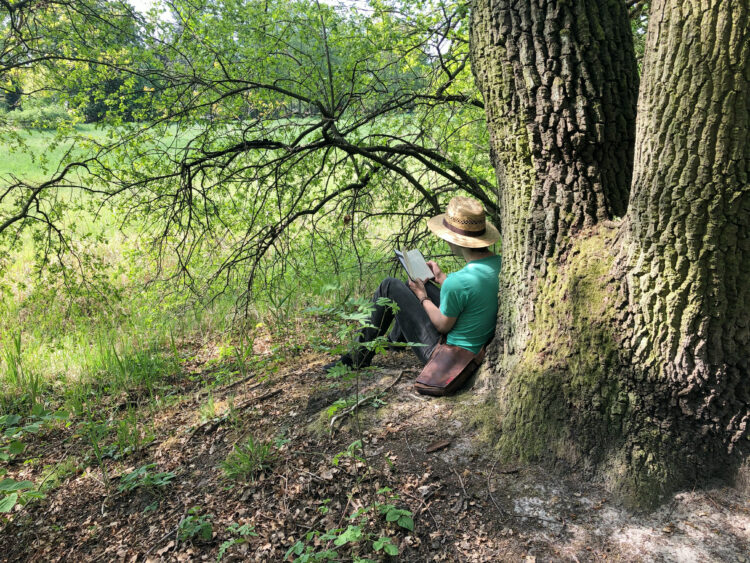 Lesen im Wald