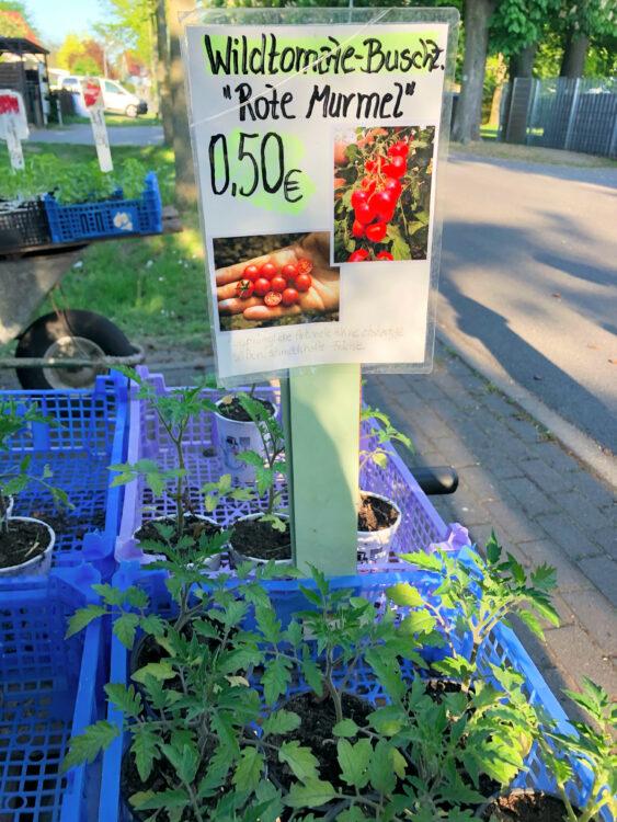 Tomatenpflanzen kaufen Falkensee