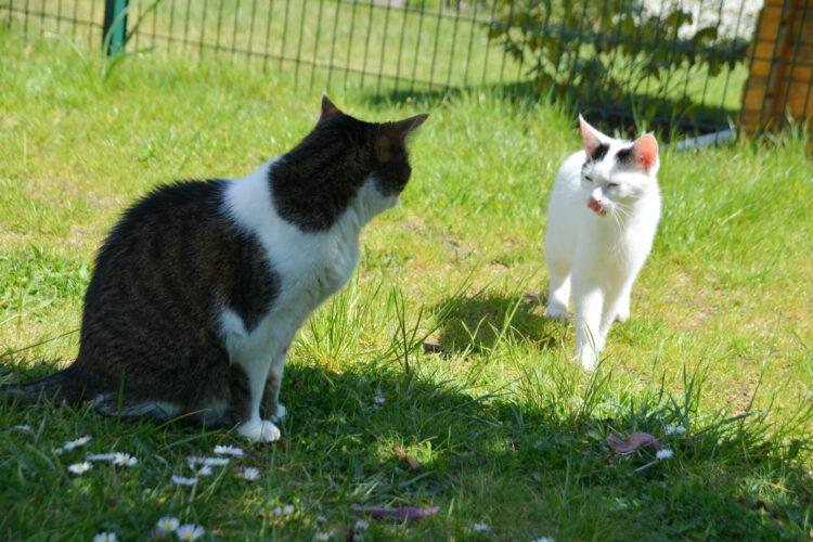 Katzen-Tag im Garten