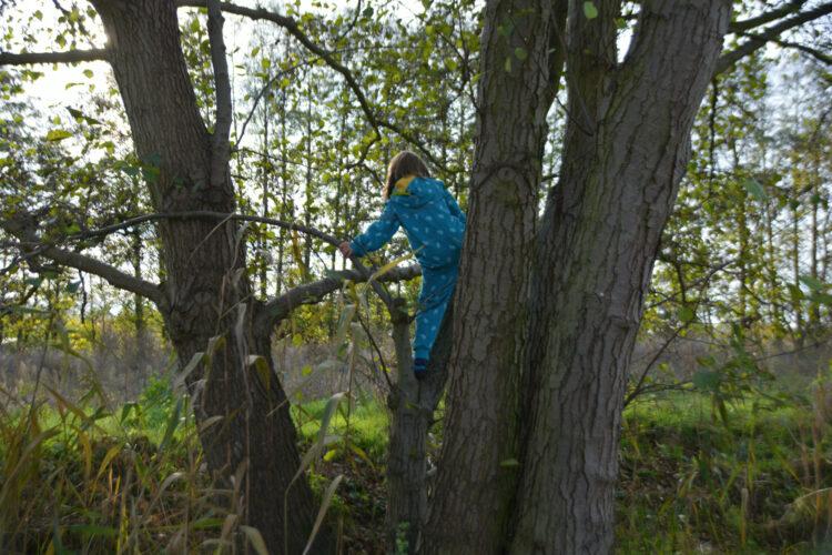 Fuchs Baum Natur