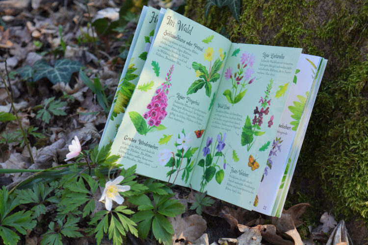 Naturführer Blumen Kinder