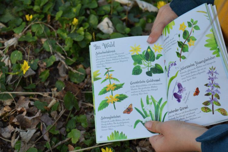 Blumen entdecken und erkennen