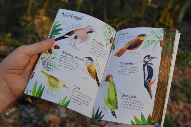 Waldvögel Kinder Wald