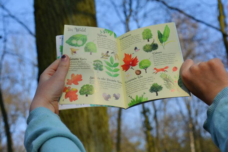 Naturführer Kindersachbuch Bäume