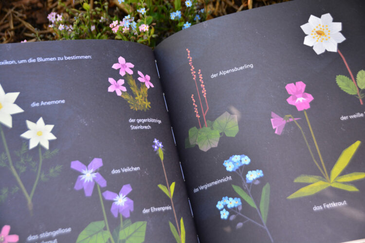 Goldene Funkelblume Kindersachbuch